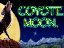 играть - Coyote Moon